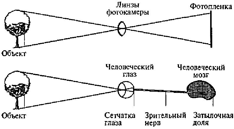 Сравнение человеческого глаза и фотоаппарата