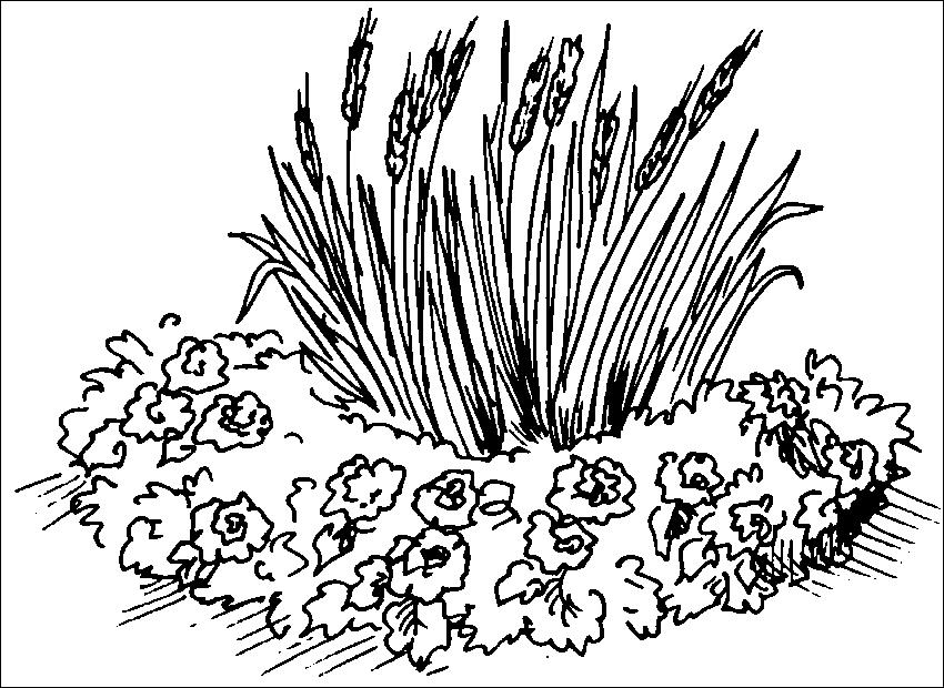 Рисунок цветы на клумбе