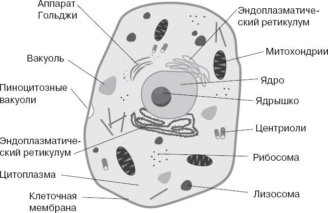 Картинки животной клетки с надписями